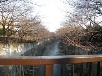加賀橋から石神井川.JPG